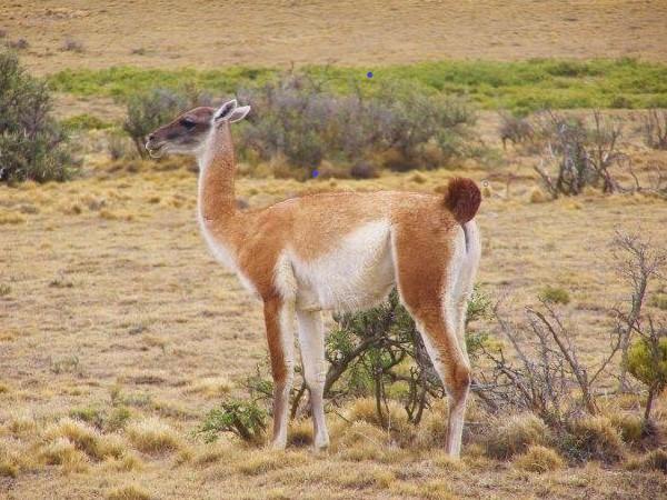 Josan Aventurs Patagonia (1)
