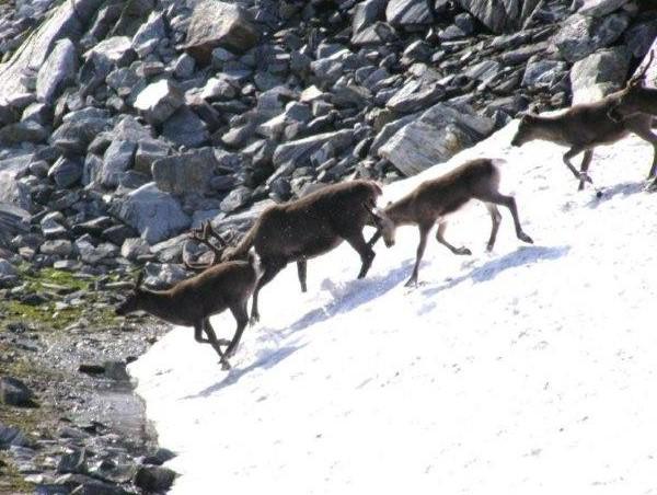 Lofoten y Cabo Norte Josanaventurs (10)
